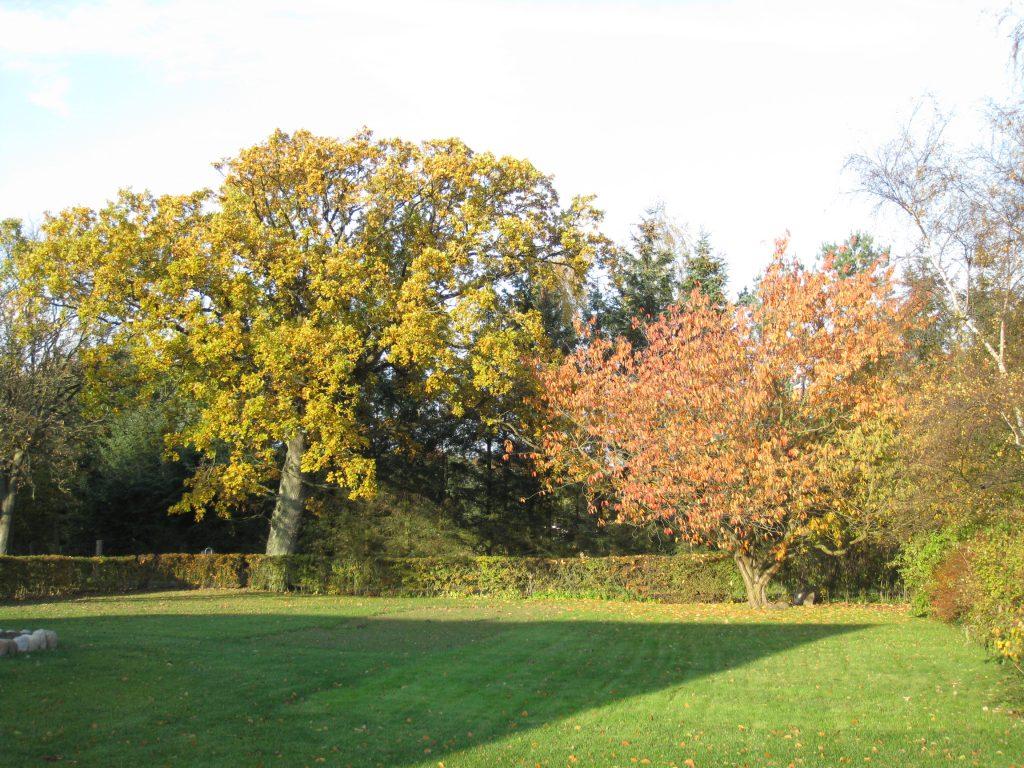 Havens træer i efterårs-farver